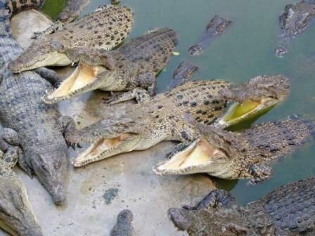 Krokodail